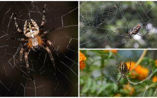 As aranhas sabem voar?