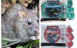 Morte do rato veneno
