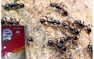 Significa Trovão 2 das formigas