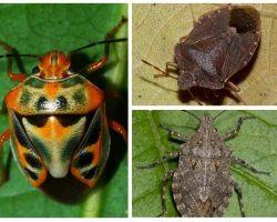 Como são os insetos na foto