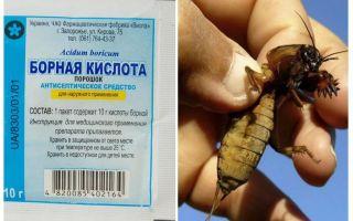 O que envenenar Medvedka no jardim