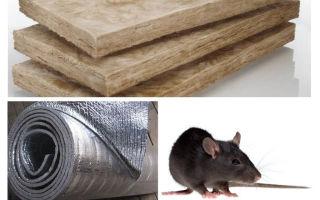 Que tipo de isolamento não comem ratos e camundongos