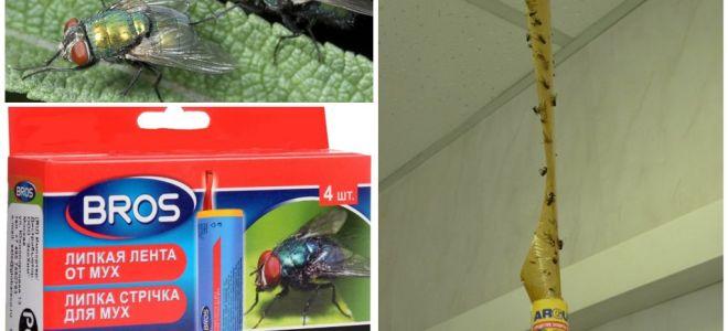 Lojas e remédios populares contra moscas