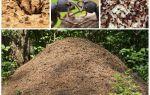 A vida das formigas em um formigueiro