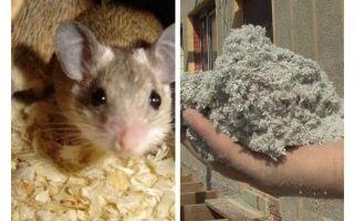 Que tipo de isolamento não comem ratos