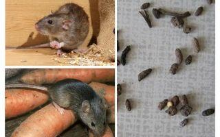 Como lidar com ratos em uma casa particular