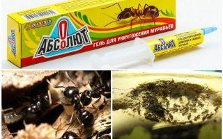 Absolut das formigas
