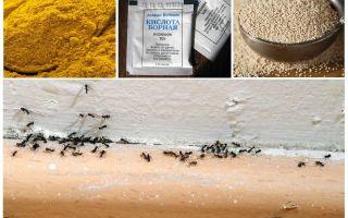 Fundos de formigas na casa do país
