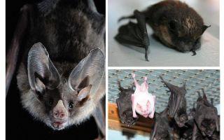 Como se livrar de morcegos na casa