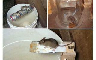 Como fazer uma ratoeira com suas próprias mãos