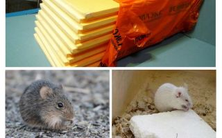 Se ratos estão comendo penoplex