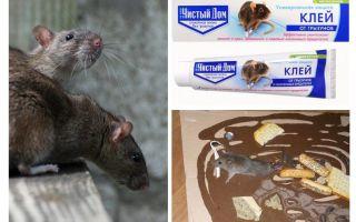 Casa limpa de argila de roedores e insetos