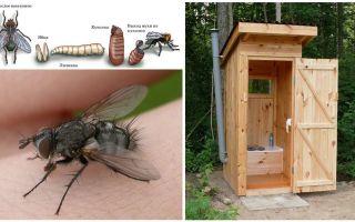 Como se livrar de moscas no banheiro na rua