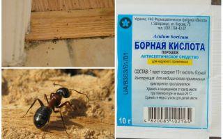 Como remover formigas de uma casa de madeira