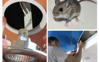 Como se livrar de ratos no teto do estiramento