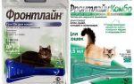Gotas de pulgas da linha de frente para gatos