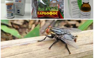 O que os medros e as moscas temem, uma revisão dos meios