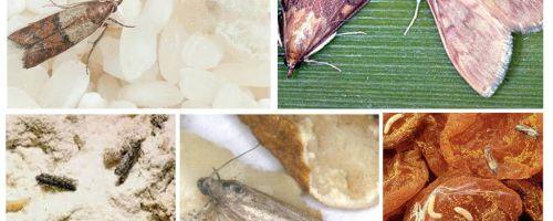 Como trazer mariposa de comida na cozinha
