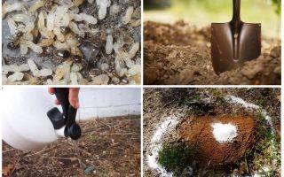 Como tirar formigas do jardim remédios populares