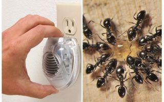 Repelente de formiga ultra-sônica eficaz