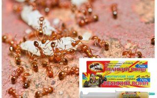 Remédio Great Ant Warrior