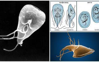 Doença gengival em adultos - sintomas e tratamento