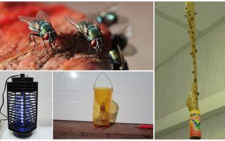 Como lidar com as moscas na casa de campo