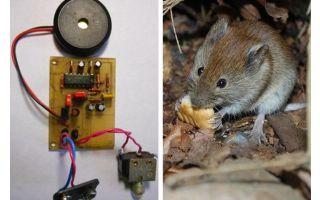Ratos repelentes ultra-sônicos e ratos com suas próprias mãos