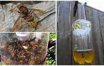 Armadilhas caseiras para vespas e vespas