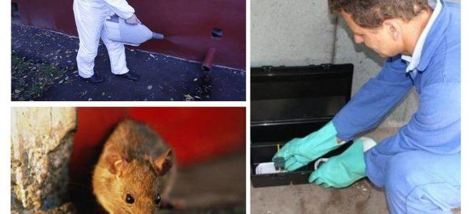 Extermínio de ratos e camundongos por serviços especializados