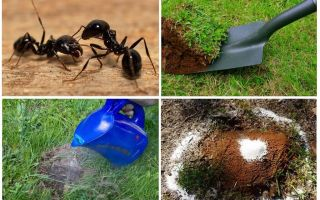 Como se livrar das formigas no jardim remédios populares
