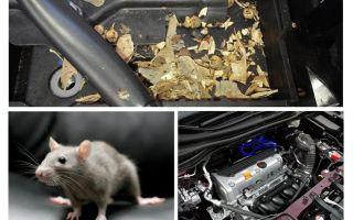 Como tirar os ratos do carro