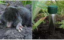 Como se livrar de moles na casa de campo de verão e jardim
