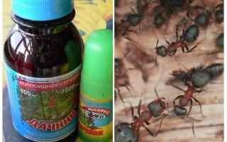 Significa o residente de verão das formigas