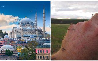 Existem mosquitos na Turquia?