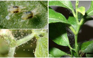 Como se livrar de ácaros em plantas de casa