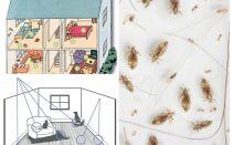 Como se livrar das pulgas domésticas