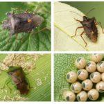 Bug da floresta