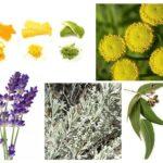 Remédios populares para traças de alimentos