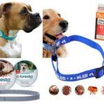 Colar de pulgas para cães