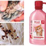 Shampoo de pulgas para gatinhos