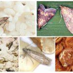 Tipos de mariposa de comida