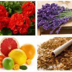 Remédios populares para traça
