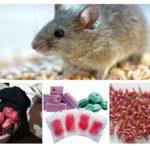 Formas de veneno de rato