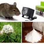 Métodos de lidar com ratos