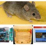 Veneno de ratos
