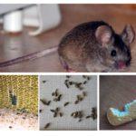 A presença de ratos no apartamento