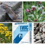 Remédios populares para ratos