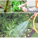 Métodos de controle de insetos