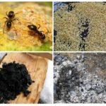 Receitas populares de formigas
